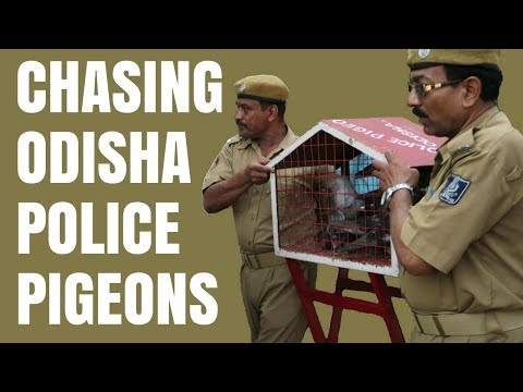 PIGEONOGRAM by ODISHA POLICE | You will forget WhatsApp !!
