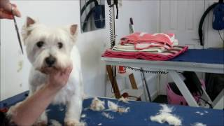 HOW TO DO A WEST HIGHLAND WHITE TERRIER