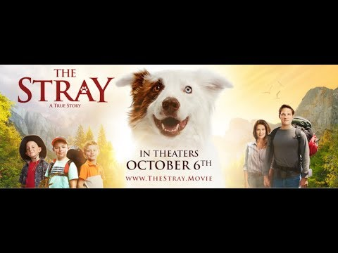 The Stray 2017 Movie Emotional Trailer With Boxer Rex