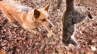 Old Dogs Can Learn New Tricks (Squirrel Hunting with Dog)