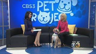 CBS 3 Pet Project: National Pet Parent Day