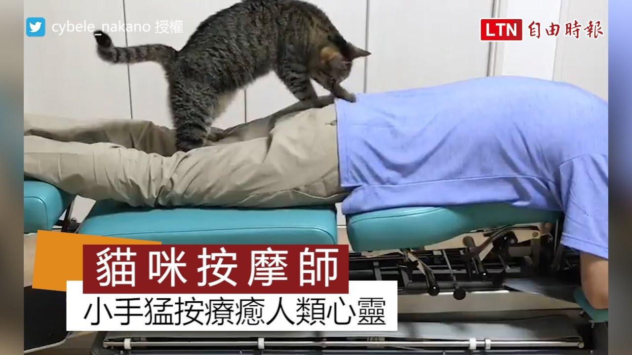 貓咪按摩師治療人類身體痛! 超萌服務網友直喊:好想去!