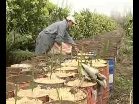 Programa Tierra Adentro - Palma Chilena