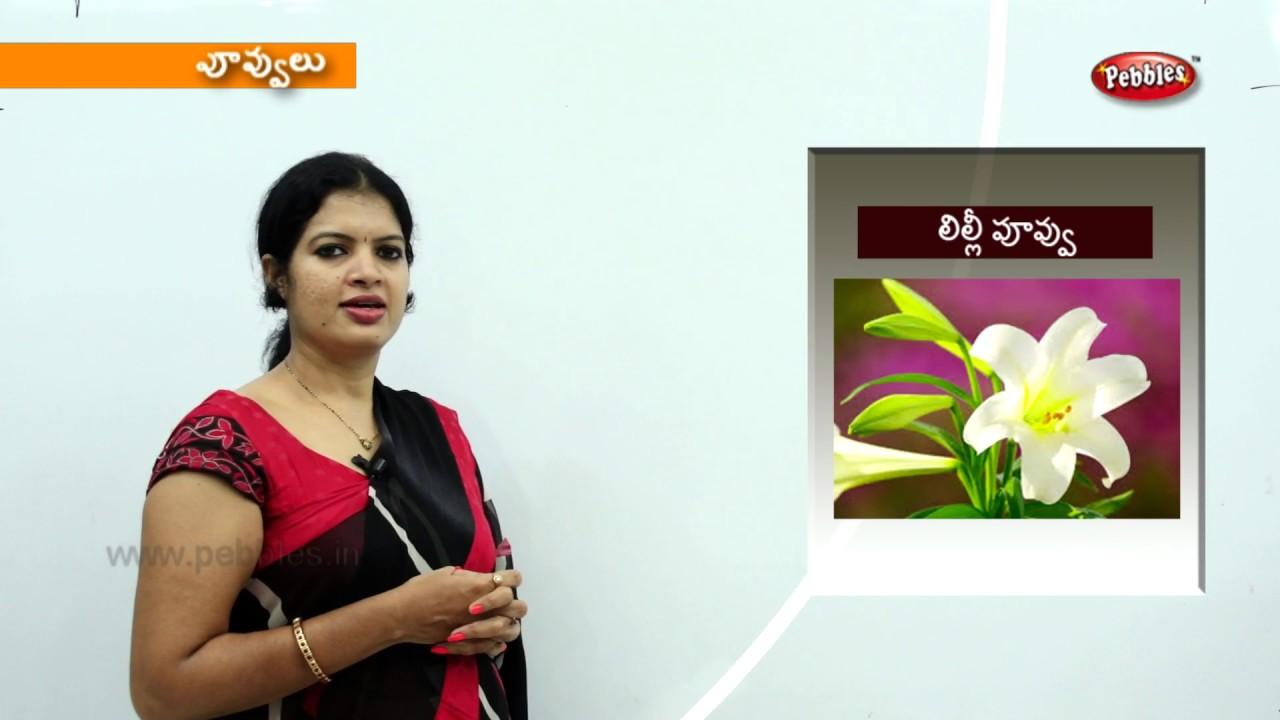 Learn Flowers Names In Telugu Preschool Videos Kids Educational