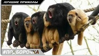 НОВЫЕ НАРЕЗКИ ЮТУБ видео смотреть русские приколы до слез 2018 #18
