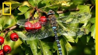 The Secret World of Dragonflies