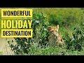WOW!! Look Gorilla Safari  The Masai Mara l Destination Holiday