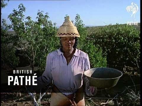 Emergent Africa (1968)