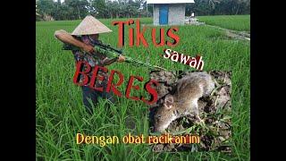 Download lagu Cara mengatasi TIKUS sawah