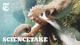 How Octopuses Communicate | ScienceTake