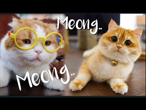 KUCING LUCU MEONG MEONG | FUNNY CATS COMPILATION ✓