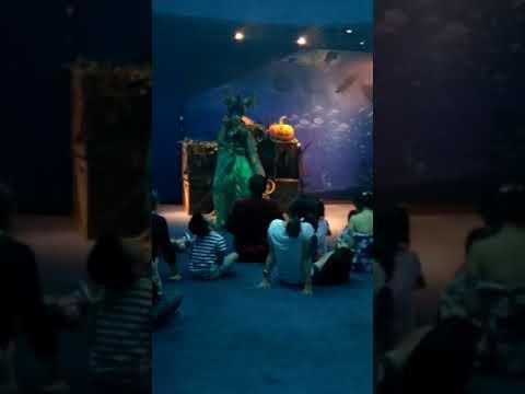 Environmental speech Going to S.E.A. Aquarium in Singapore