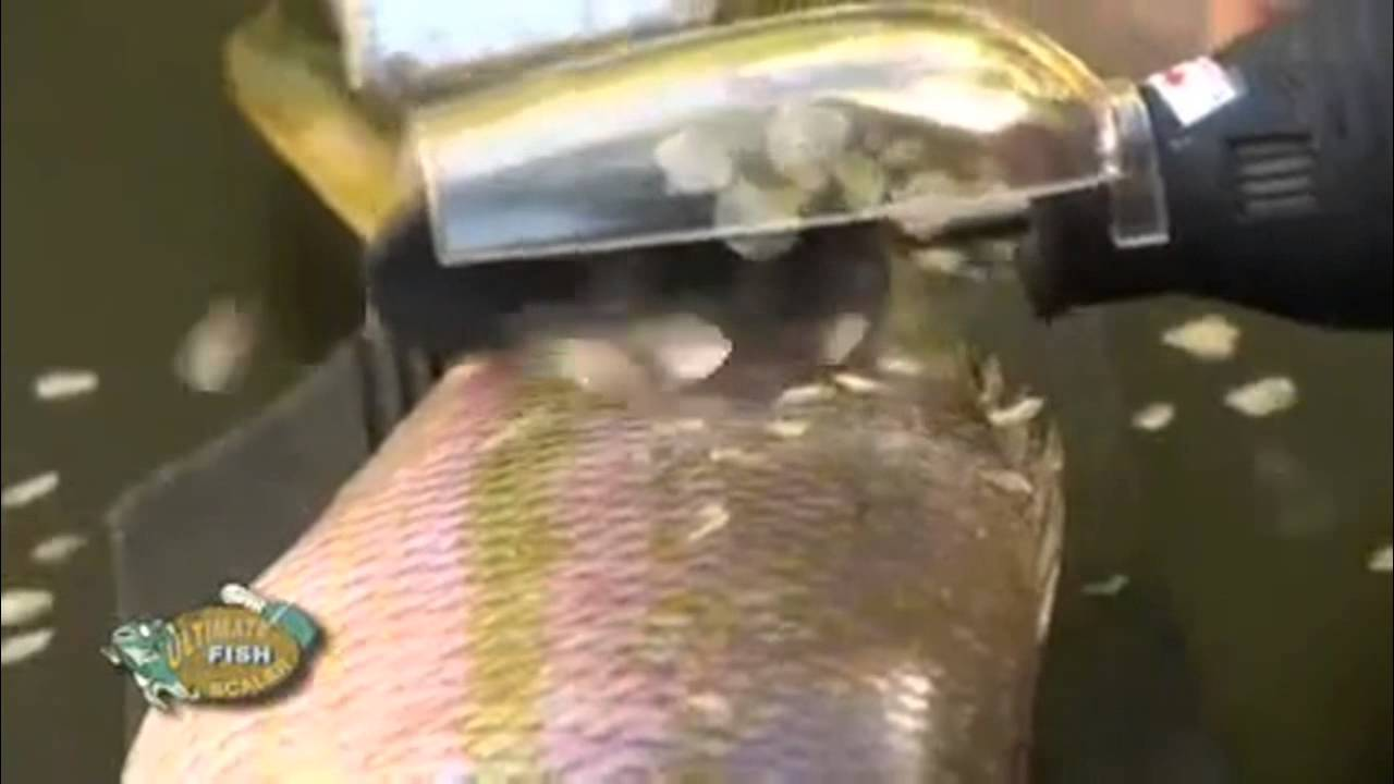 Electric fish scaler whatsapp 97450111 youtube for Electric fish scaler