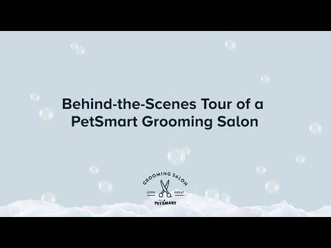 Behind The Scenes At PetSmart Grooming Salons