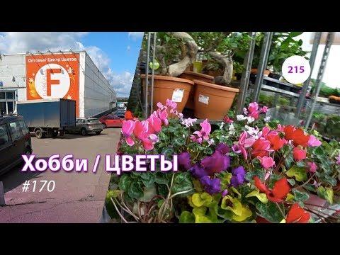 215#170 / Хобби-Цветы / 10.2019 - Floreville (ФЛОРЭВИЛЬ. МОСКВА)