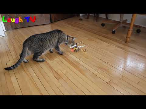 Best Funny Scared Cats  Of Random Things  - A Funny Cat Videos Compilation 2016