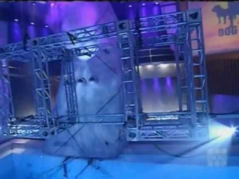 Dog Eat Dog: Episode 13 High Heel Balance Challenge