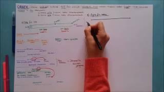 26) MALİ BORÇLAR-1  (300 Banka Kredileri)