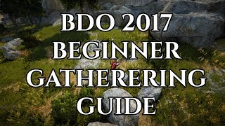 BDO 2017 Beginner Gathering Guide [Black Desert Online]