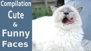 Cute and Funny Expressions Compilation | Bowie The Ragdoll Cat