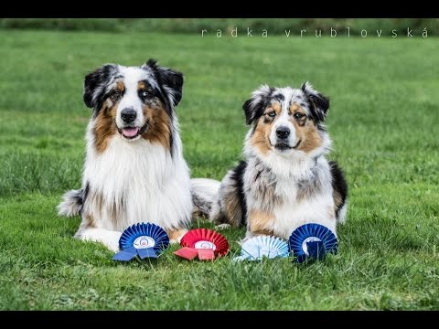 Amazing dog tricks by australian shepherds Airin & Charlie