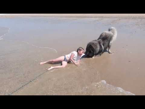 Rich Kaminski - Little Girl Rescued By Her Loyal Dog