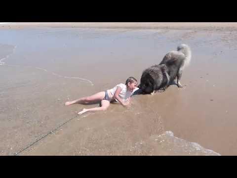 Rich Kaminski - Little Girl Rescued By Her Loyal Dog
