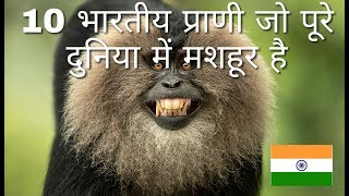 Most Attractive Animals Of India