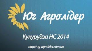 Описание гибрида кукурузы НС 2014