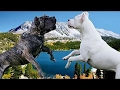 Presa Canario vs Dogo Argentino - Dog Videos [Mr Friend]
