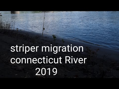 STRIPER MIGRATION CONNECTICUT RIVER 2019