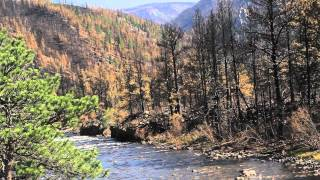 VIDEO: Runoff from the High Park Fire blackens the Cache la Poudre River with Ash