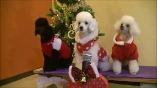 Dog School Music Motion Jewel,Dance&Racer193♪ thumbnail