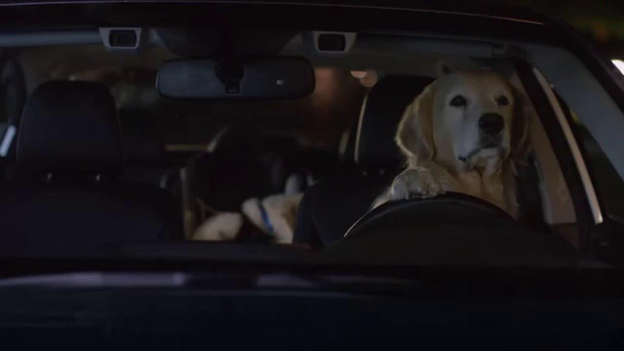 Funny Subaru Superbowl Commercial