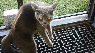 ПРИКОЛЫ С ЖИВОТНЫМИ 😺🐶 Смешные Животные Собаки Смешные Коты Приколы с котами Забавные Животные #128
