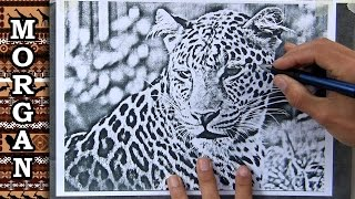 Artists Reference Photos - easy trace - Jason Morgan wildlife art