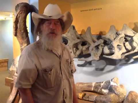 Dinosaurs & Middle Earth - Morrison Museum of Natural History Tour
