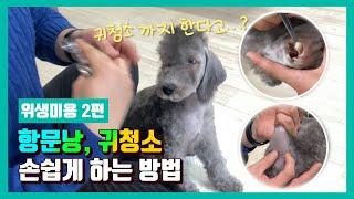 강아지 항문낭, 귀청소 누구나 할수있는 간단한 방법 […