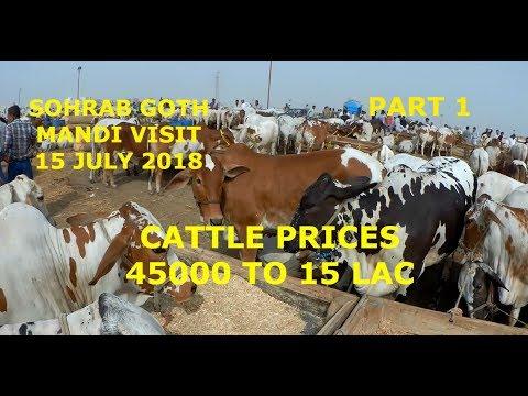 Cattle Prices - Sohrab Goth Mandi Visit 15 July 2018 - Part 1