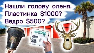 Нашли голову оленя. Ведро $500? Пластинка за $1000? Находки в брошенных складах.