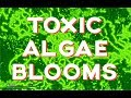 Toxic Algae Outbreaks- How toxic are they?