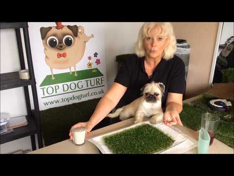 How to use ZeoStop - The Best Artificial Grass Deodoriser