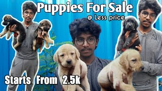 Puppies for sale || Dogs sales || All breeds puppies at less price || Wow pup's ||  Paithiyakaran
