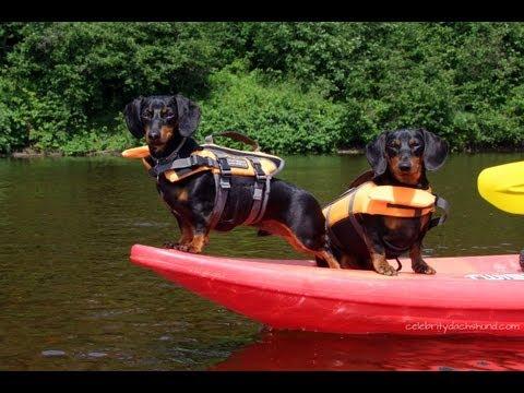 Kayaking with Dachshunds | GoPro Doggy Cam | Crusoe & Oakley Go Kayaking