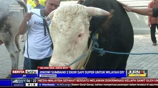 Presiden Jokowi Sumbang 2 Ekor Sapi Untuk Yogyakarta
