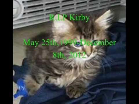R.I.P Kirby Tribute