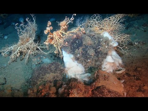 Deep-sea exploring with the Remotely Operated Vehicle – Ian Murdock