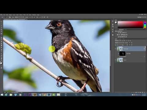 Photography Tutorials: Selective Sharpening In Photoshop CC