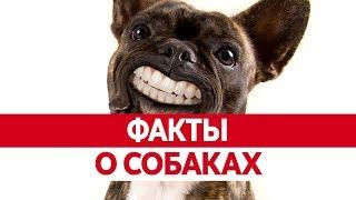 Интересные ФАКТЫ О СОБАКАХ. Вся правда о собаках!