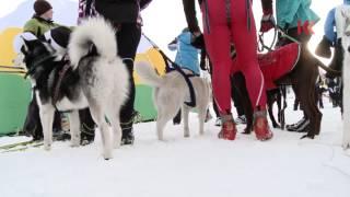 видео Путешествие по центральной Камчатке на собачьих упряжках